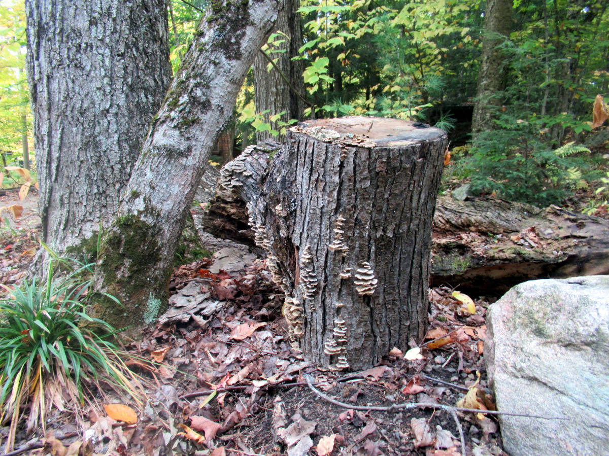 "1st Chldren ""Tree Stump While out for a Walk by Alexander"